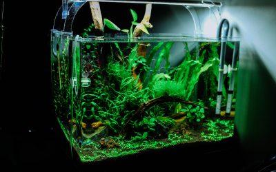 Tid til at udskifte planterne i dit akvarie?
