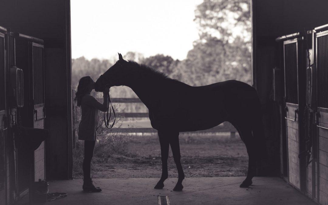 Forkæl din hest med sunde godbidder